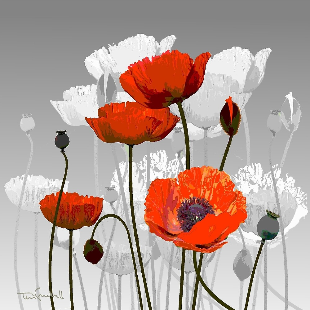 POPPIES by TERRI CRACKNELL