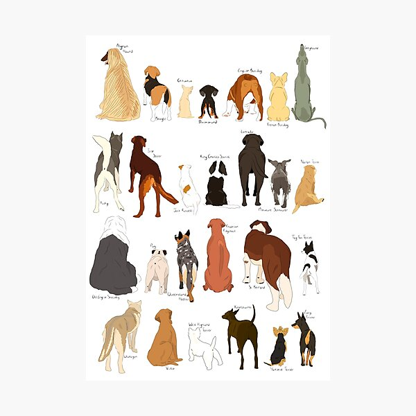 A-Z Dog Butts Photographic Print