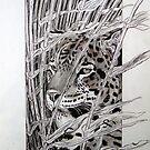 Leopard by Robert David Gellion