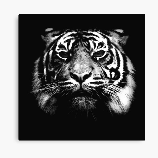 Illustrated Tiger  Canvas Print