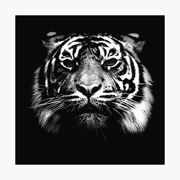 Illustrated Tiger  Photographic Print