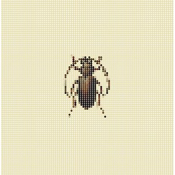 Brown Beetle by marcorecuero