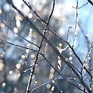 Ice crystals and Sunshine by Ryan McGurl