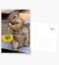 CHIPPY Postcards