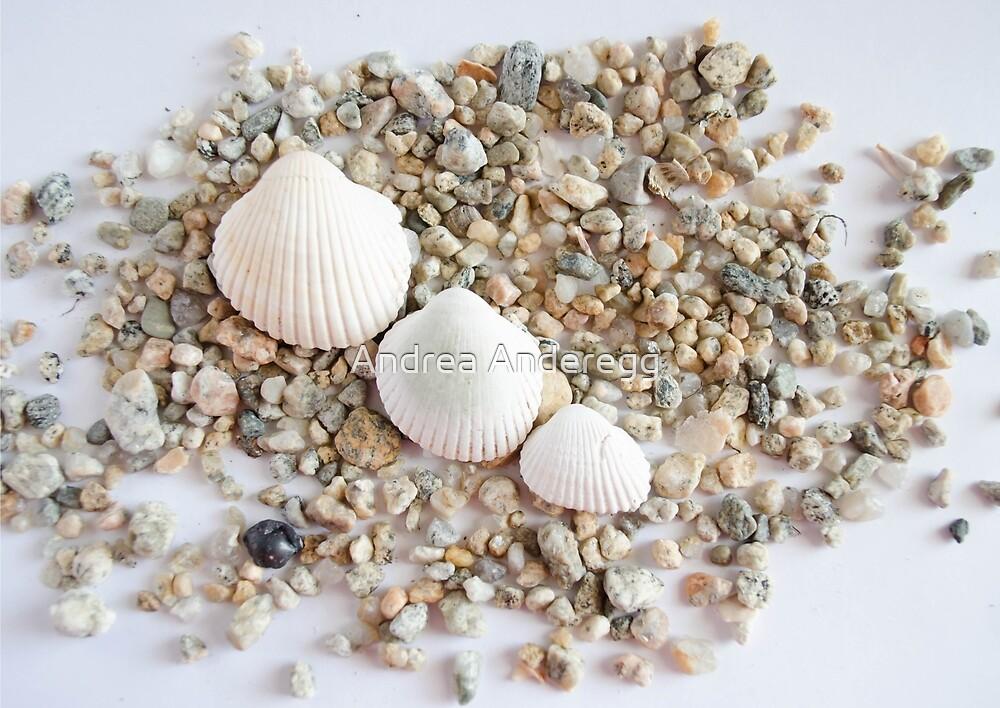 Seashell 1 by andreaanderegg