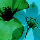 Green & Blue by elisabeth tainsh