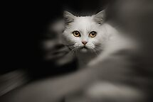 Wish i had a lensbaby ! :))) by JudyBJ