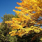 MAINE in the Fall by AnnDixon