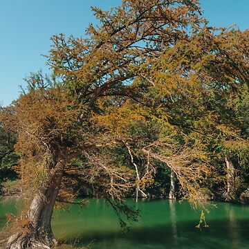 Beautiful Autumn at Guadalupe River State Park by cheesim