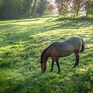Dappled Sunlight and a Horse Grazing by Jim Key
