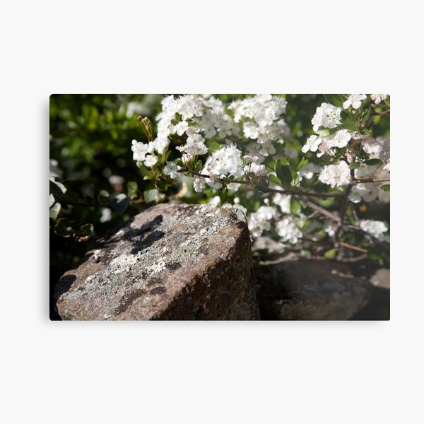 plant types #64, flowers & lichen Metal Print