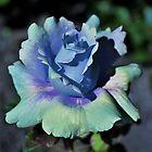 Blue Sherbert Rose by Len Bomba