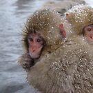sharing warmth by wilderpisces