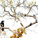 Raven and the Woodpecker by Allan  Erickson