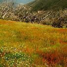 Colours Of The Victorian High Country by Joe Mortelliti