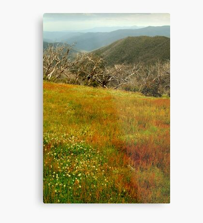 Colours Of The Victorian High Country Metal Print