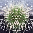 Grasses 360 II by Mike Solomonson