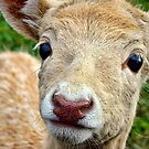 Young Fallow Deer by Heather Haderly