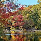 Autumn In New Jersey by Lanis Rossi
