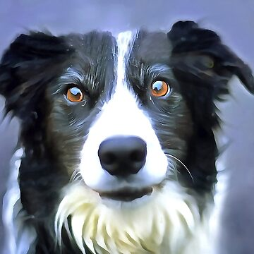 Border collie. (Painting) by cmphotographs