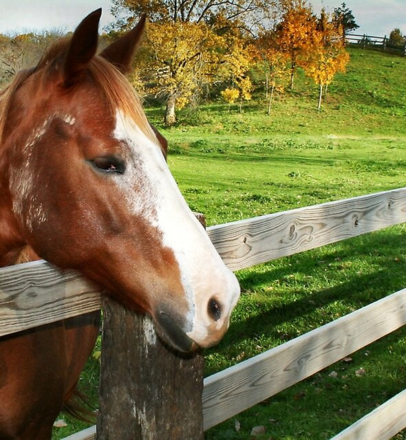 Horse Sense by Nadya Johnson