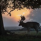 Fallow deer (Dama dama) by Stephen Liptrot