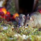 pair of  mice at winter log cabin very festive  by Simon-dell