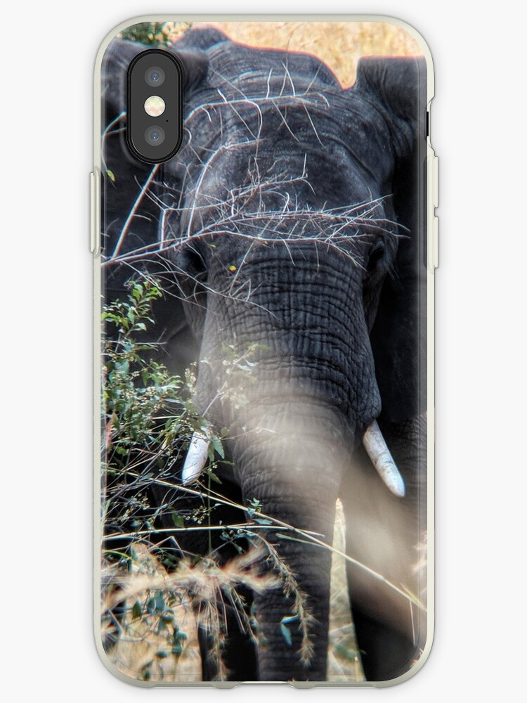 Young African elephant in the savannah by Angela Ferguson