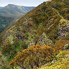 High Country Views by Joe Mortelliti