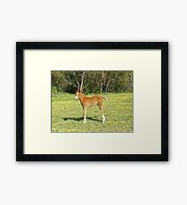 Nevada filly Framed Print