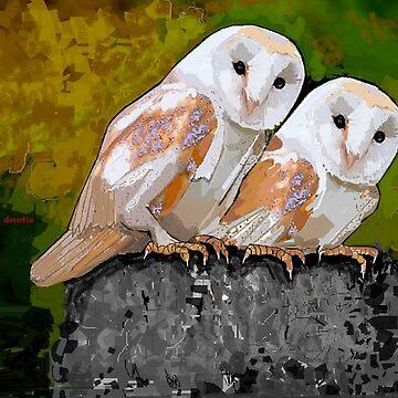 Barn Owl Watchers by dorcas13