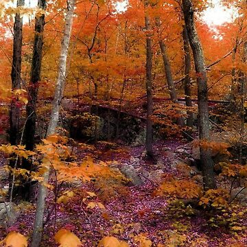 Colors of Fall on Ramapo Mountain, North New Jersey by amberwayne52