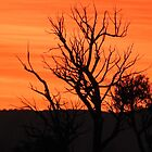 Sunrise in Grampians Victoria  by ABY-Creative