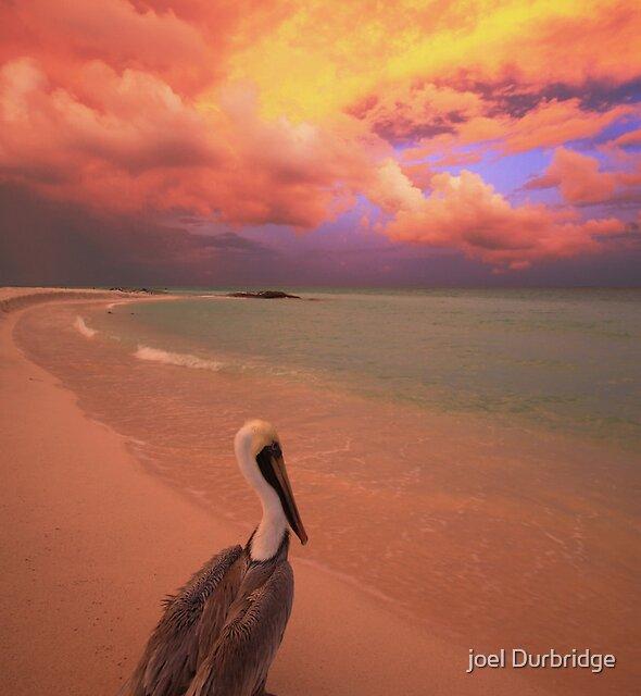 mexican pelican by joel Durbridge
