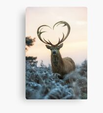 Stag With the Heart Shaped Antlers (love you deer) Metal Print