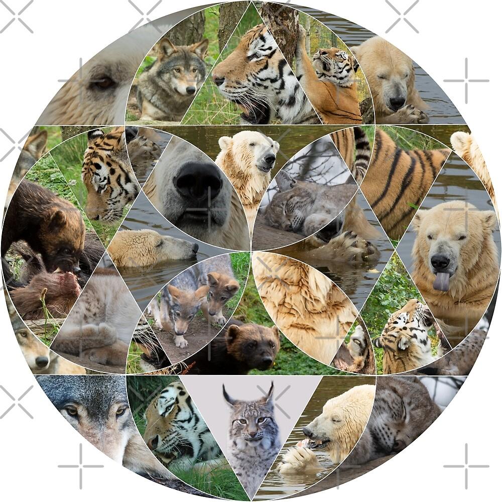 Carnivores - wolf, lynx, polar bear, wolverine, amur tiger by SiobhanFraser