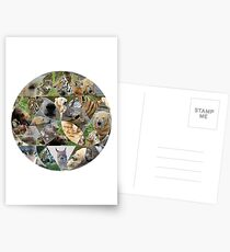 Carnivores - wolf, lynx, polar bear, wolverine, amur tiger Postcards