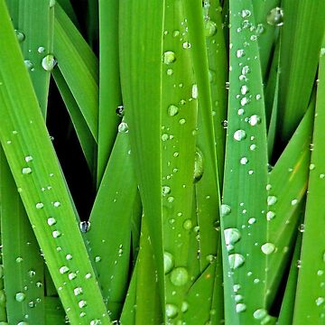 Wet Leaves by procrest