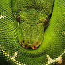 I am green by Daidalos