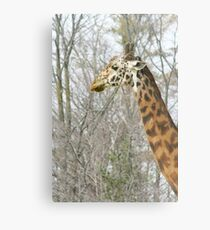 Giraffe Neck Metal Print