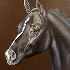 Sandhurst, Oldenburg Stallion by Jean Farquhar