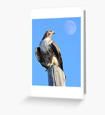 Red-Tailed Hawk and Moon Greeting Card