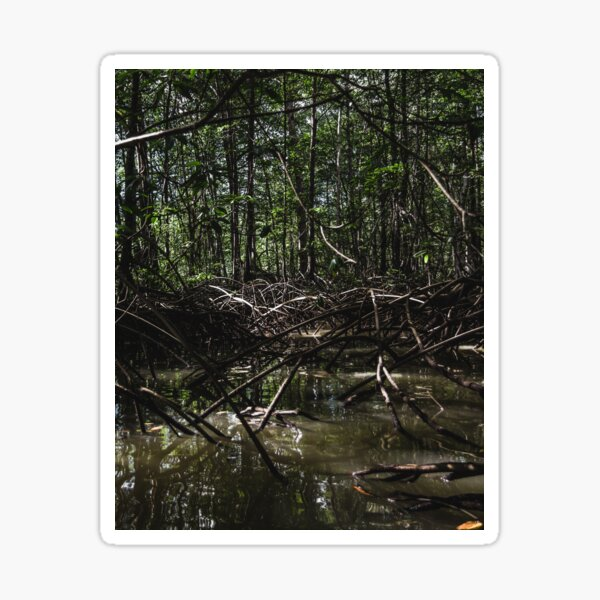 Mangrove Sticker