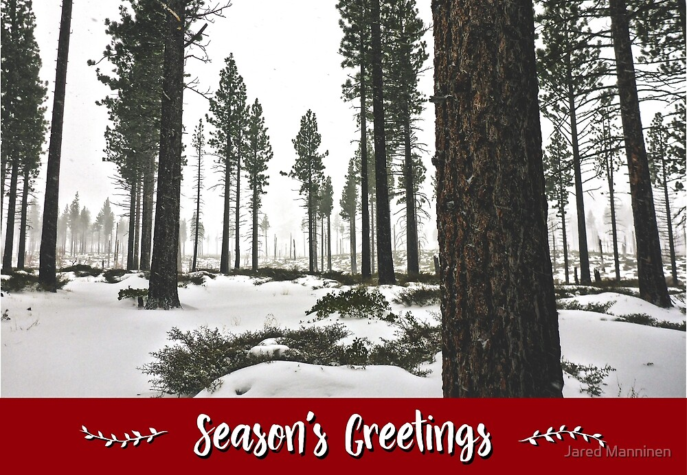 Winter Forest Holiday Card by Jared Manninen