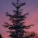 A sky at dusk by Profo Folia