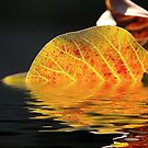 Autumn Reflection by maf01