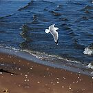 Seagull Waves by DeerPhotoArts