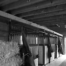 Stable by Lynn  Gibbons