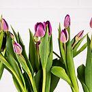 Purple Tulips by Adam Nixon