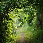 The green path to Compostelle by Patrick Morand